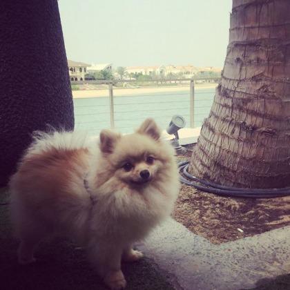 Dog-Friendly Cafes and Restaurants in Dubai